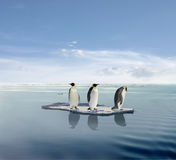 Penguins on melting iceberg