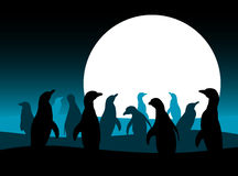 Penguins and moon Royalty Free Stock Images