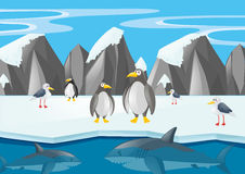 Penguins and other animals in north pole Royalty Free Stock Photography