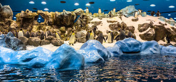 Penguins Panoramic Stock Photography