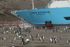 Penguins in Patagonia Stock Image