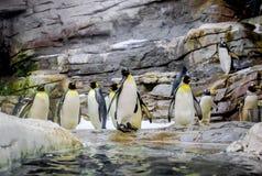 Penguins. Photo taken in Selwo Marina. Benalmadena, Malaga. Spain royalty free stock photography
