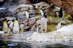 Penguins. Photo taken in Selwo Marina. Benalmadena, Malaga. Spain royalty free stock photo