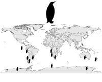 Penguins range Royalty Free Stock Photos
