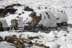Penguins resting Stock Image