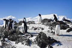 Penguins on rock Stock Photos