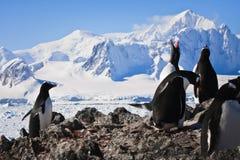Penguins on rock Stock Image