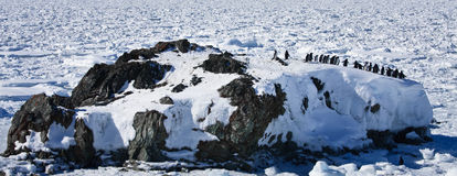Penguins  on a rock Stock Photography