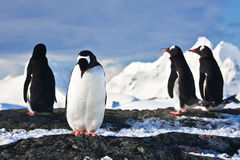 Penguins  on a rock in Antarctica Stock Photo