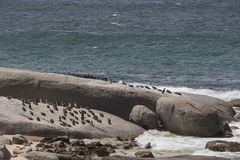 Penguins on a rock at Boulders Beach in Simonstown Stock Images
