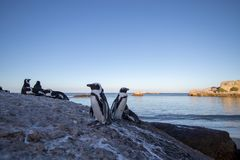 Penguins on rock royalty free stock photography