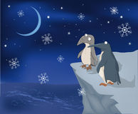 Penguins on a rock and snow Royalty Free Stock Photo