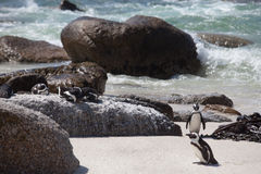 Penguins on the rocks Royalty Free Stock Images