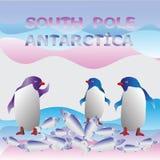 penguins Südpol antarktik stock abbildung
