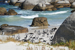 Penguins on the savage beach Royalty Free Stock Image