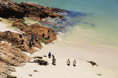 Penguins  on the savage beach and rocks in betty's bay - Hermanus Stock Photos
