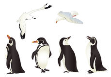 Penguins and Seagulls Stock Photo