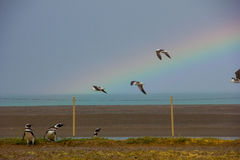 Penguins and seagulls with a beautifull rainbow. Royalty Free Stock Photos