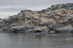Penguins and seal in Useful Island, Antarctica Stock Images