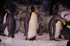 Penguins at Seaworld, Orlando Royalty Free Stock Photos