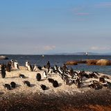 Penguins in Simonstown. In 1985, a colony of protected South African penguins settled on the beach at Boulders Beach in Simonstown. Soon, Boulders Beach became a stock image