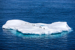 Penguins on a small iceberg in Antarctica Royalty Free Stock Photography