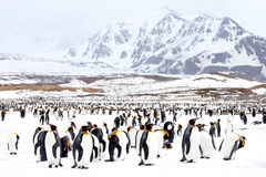 Penguins on snow stock image
