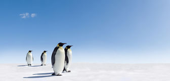 Penguins on snowy landscape Stock Photos