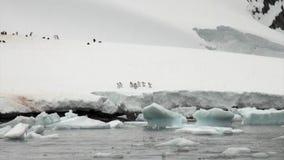 Penguins on snowy rocky coast iceberg and ice floe in ocean of Antarctica. Penguins on iceberg and ice floe in ocean of Antarctica. Glacier on background of stock video footage