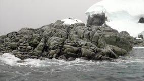 Penguins on snowy rocky coast iceberg and ice floe in ocean of Antarctica. stock footage