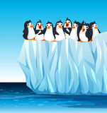 Penguins standing on iceberg Royalty Free Stock Images