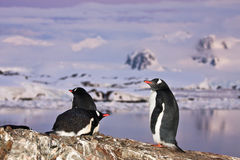 Penguins standing on a mountain Royalty Free Stock Photo