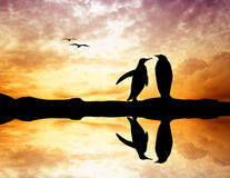 Penguins at sunset Royalty Free Stock Photography