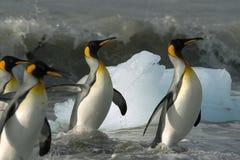 Penguins swim. (my polar series Royalty Free Stock Photos