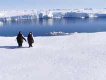 Penguins With A View royalty free stock photography