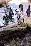 Penguins waiting in stone Stock Image