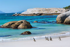 Penguins walk on sunny beach Royalty Free Stock Photography