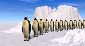 Penguins walking Royalty Free Stock Images