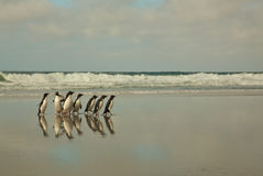 Penguins Walking on a Beach Royalty Free Stock Photos