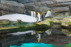 Penguins in zoo Stock Photography