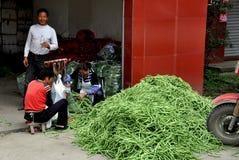 Pengzhou, Κίνα: Γυναίκες που τοποθετούν τα πράσινα φασόλια σε σάκκο Στοκ Εικόνες