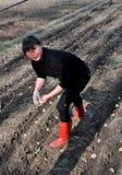 pengzhou фарфора засаживая женщину картошек Стоковые Фото