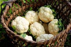 pengzhou хлебоуборки фарфора cauliflowers корзины Стоковое Фото