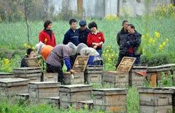 Pengzhou, China: Apicultores y colmenas Fotografía de archivo