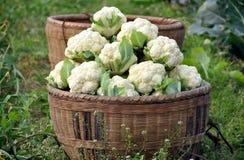 Pengzhou, China:  Basket of Cauliflower Royalty Free Stock Photography