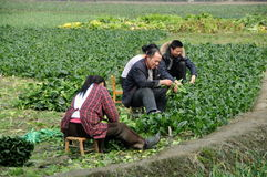 Pengzhou, China: Bauernhof-Familie, die auf dem Gebiet arbeitet Lizenzfreie Stockfotografie