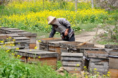 Pengzhou, China: Beekeeper with Hives Royalty Free Stock Images