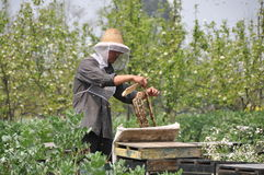 Pengzhou, China: Beekeeper with Honeycomb Royalty Free Stock Image