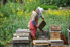 Pengzhou, China: Beekepper con el peine de la miel Fotos de archivo