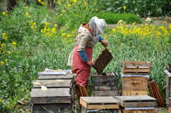 Pengzhou, China: Beekepper with Honey Comb Stock Photos